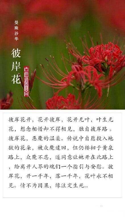 九大凄美之花,你为哪个故事动容?