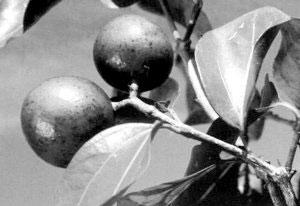 中国古代的七大毒药 只需一滴便可要人命