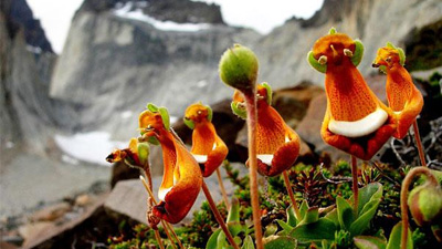 地球上最奇葩的花儿大集合 绝对有你没见过的