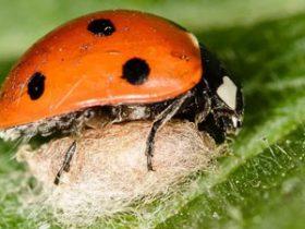揭秘大自然中最恐怖寄生虫 能将宿主变僵尸