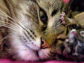 南非诞生一只双脸小猫 两张嘴两个鼻子三只眼